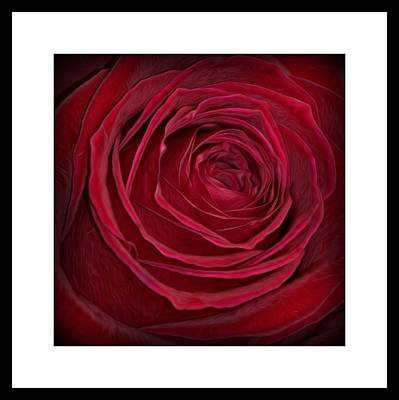 Photograph - Passionate Rose by Kimberly Woyak