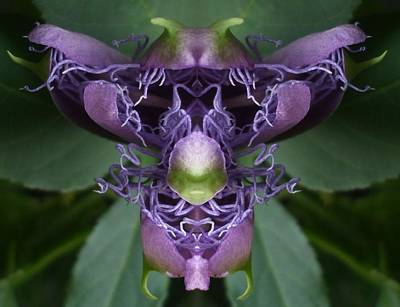 Passionflower Princess Print by Melody Harris