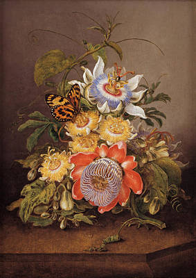 Passionflower Painting - Passionflowers by Ferdinand Bauer