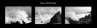 Photograph - Passions Of The Pacific Triptych  B And W by Joyce Dickens