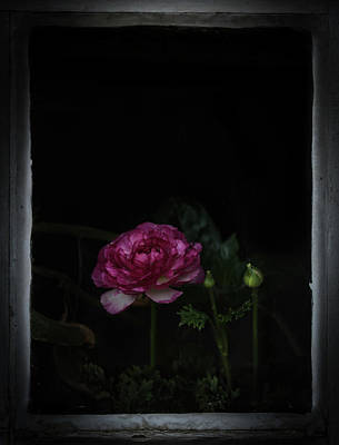 Photograph - Passions by Rae Ann  M Garrett