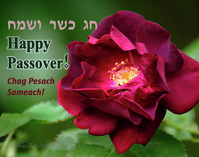 Atonement Photograph - Passover Rose by Brian Tada