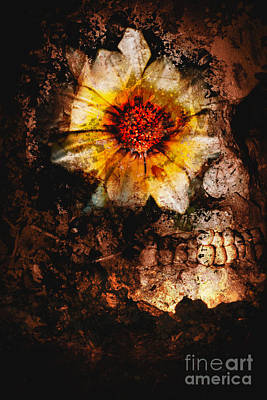 Flower Design Photograph - Past Life Resurrection by Jorgo Photography - Wall Art Gallery