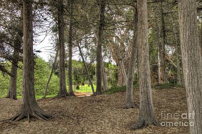 Photograph - Past The Beach And Through The Trees by Mathias