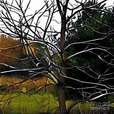 Photograph - Past The Branches by Diane Miller