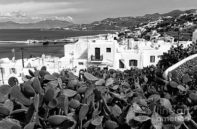 Photograph - Past The Cactus In Mykonos Mono by John Rizzuto