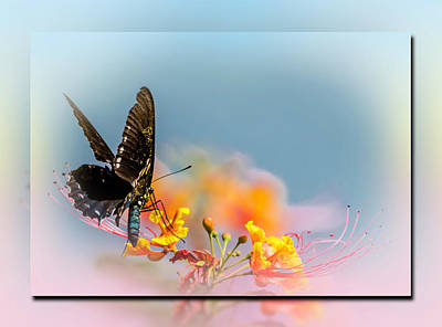 Photograph - Pastel Butterfly  by Leticia Latocki