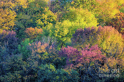 Jeffery Johnson Photograph - Pastel Colors Of Fall Radnor Lake Nashville Tn by Photo Captures by Jeffery