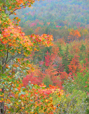 Photograph - Pastel Fall Color by Joel Gilgoff