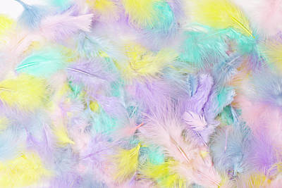 Photograph - Pastel Feathers  by Sandra Foster