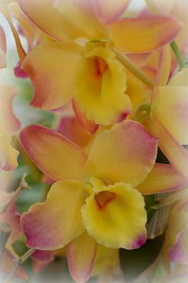 Farmhouse - Pastel flora by Linda Covino