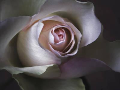 Pastel Flower Rose Closeup Image Print by Artecco Fine Art Photography