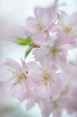 Photograph - Pastel Greetings Of Spring by Jenny Rainbow