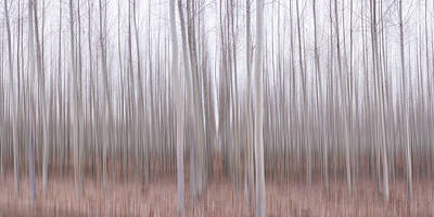 Photograph - Pastel Grove by Brad Scott