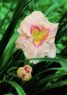 Photograph - Pastel Lily by Allen Nice-Webb