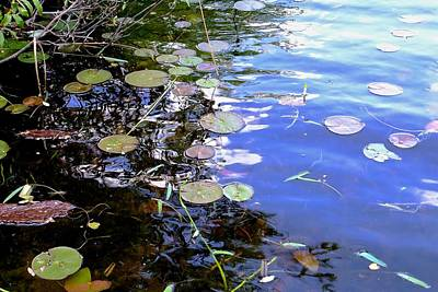 Photograph - Pastel Lily Pond by Tana Reiff
