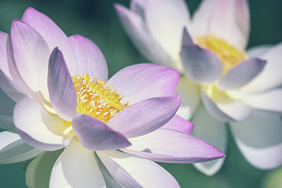 Photograph - Pastel Lotus by Jeff Abrahamson
