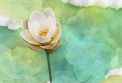 Photograph - Pastel Lotus by Shawna Rowe