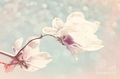 Photograph - Pastel Magnolias by Jim And Emily Bush