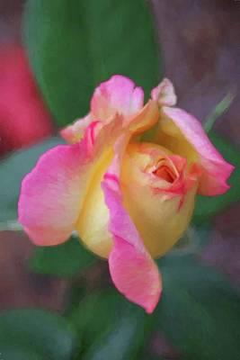 Photograph - Pastel Peace Rose by Carol Montoya
