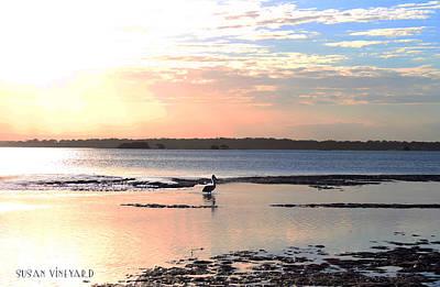 Photograph - Pastel Pelican by Susan Vineyard