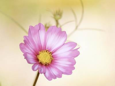 Photograph - Pastel Petals by MTBobbins Photography