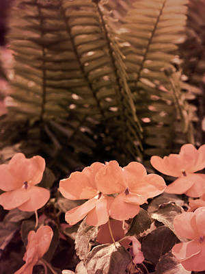 Valentines Day - Pastel Pink Flowers and Ferns Subdued by Marcia Socolik