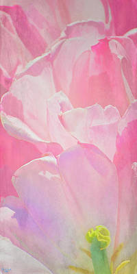 Photograph - Pastel Pink Petals by Chris Lord