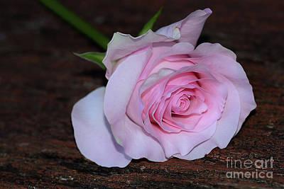 Photograph - Pastel Pink Rose By Kaye Menner by Kaye Menner