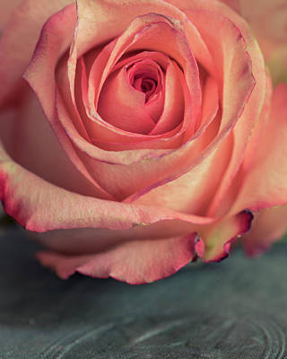 Photograph - Pastel Pink Rose by Jaroslaw Blaminsky