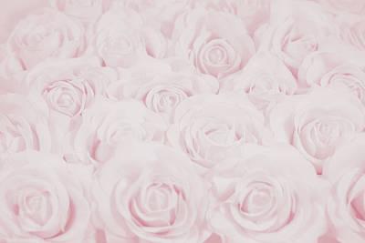 Pastel Pink Roses Art Print