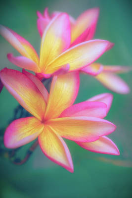 Photograph - Pastel Plumeria Dream by Jade Moon