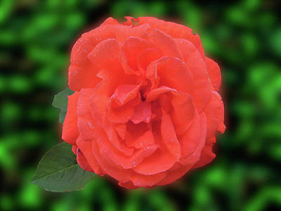 Photograph - Pastel Red by Mark Blauhoefer