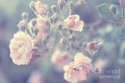 Photograph - Pastel Rose Background by Anna Om