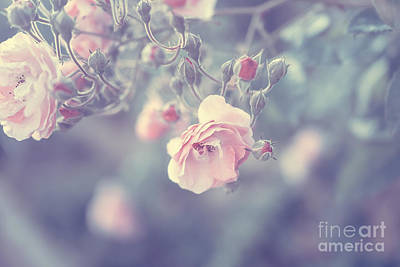 Photograph - Pastel Rose Border by Anna Om