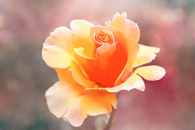 Soft Digital Art - Pastel Rose by Terry Davis