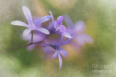 Nikki Vig Royalty-Free and Rights-Managed Images - Pastel Shades of Purple by Nikki Vig