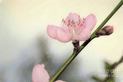 Photograph - Pastel Spring Blossom By Kaye Menner by Kaye Menner