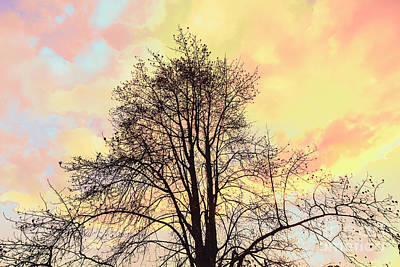 Pastel Sky Photograph - Pastel Tone Tree Silhouette At Sunset by Jorgo Photography - Wall Art Gallery