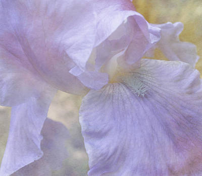Photograph - Pastel Touch by Arlene Carmel