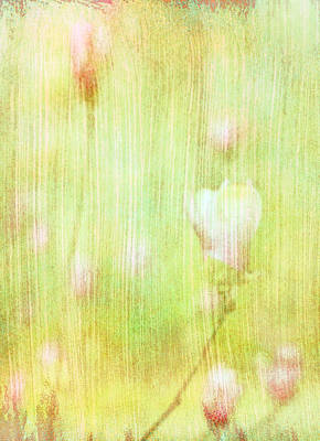 Photograph - Pastel Tulip Tree Blossoms by Suzanne Powers