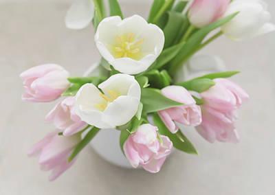 Photograph - Pastel Tulips by Kim Hojnacki