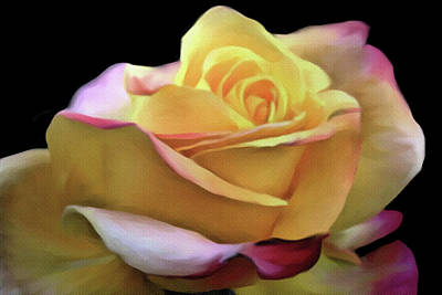 Mixed Media - Pastel Yellow Rose Canvas Proofed by Dennis Buckman