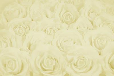 Pastel Yellow Roses Art Print