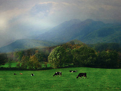 Digital Art - Pastoral Cows by Jean Moore