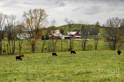 Photograph - Pastoral by Larry Ricker