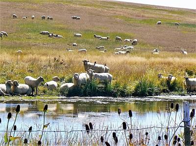 Photograph - Pastoral Sheep By Pond by Deborah Moen