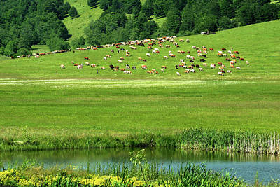 Photograph - Pasture And Lake by Emanuel Tanjala