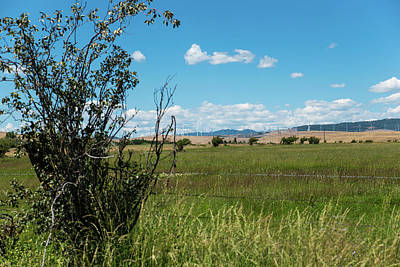 Photograph - Pasture And Wind Farm by Tom Cochran