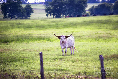 Photograph - Pasture by Anthony Bonafede